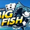 Su 888poker parte la caccia grossa coi tornei Big Fish!