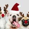 Grinding natalizio? Ecco i migliori tornei online dal 24 al 26 dicembre