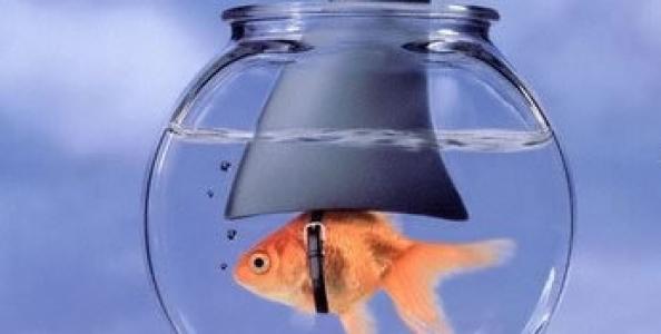 """I cash weak games: adattarsi ad un tavolo di """"fish"""". Seconda parte"""