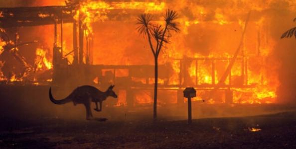 Il poker si mobilita per gli incendi in Australia: l'Aussie Millions dona 5 milioni di dollari